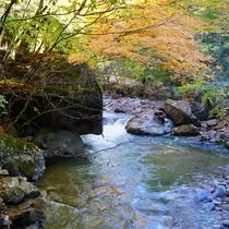 *紅葉/例年見頃10月下旬 本谷川と彩り鮮やかな紅葉はカメラマンに人気です。