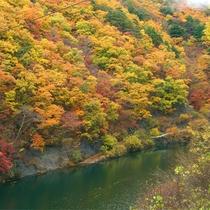 *紅葉/例年見頃10月下旬 本谷川渓谷と美しい紅葉をお楽しみくださいませ。