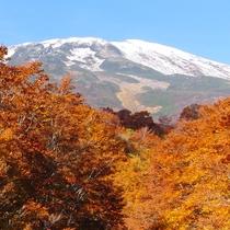 *紅葉は例年10月上旬に色づき始めます。