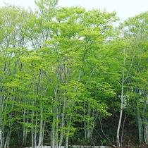 *【鳥海山】湯の台口から登るルート。木々の緑で癒されます。