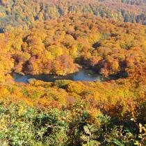 *鳥海山荘からの紅葉