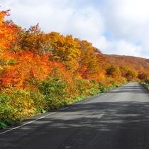*鳥海山荘からの紅葉ライン