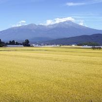 **【庄内平野】鳥海山荘を望む。自然の中で育った米は絶品。