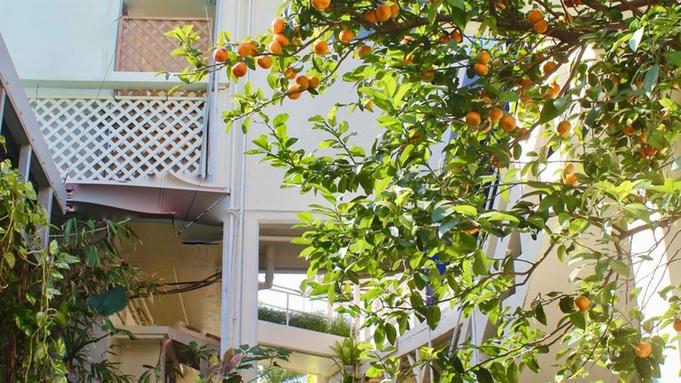 【朝食付】本場南フランスのコース料理を朝から贅沢に堪能