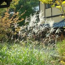 *敷地内一例:秋景色