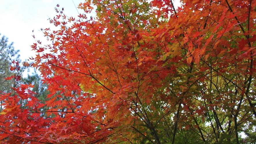 *【敷地内の紅葉】四季折々の景色をお楽しみください。