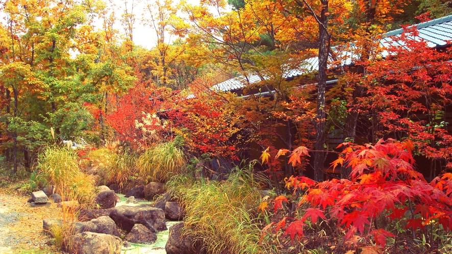 *【敷地内の紅葉】色鮮やかに染まる秋景色をお楽しみください。
