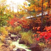 館内紅葉の様子/色鮮やかに染まる秋景色をお楽しみください。