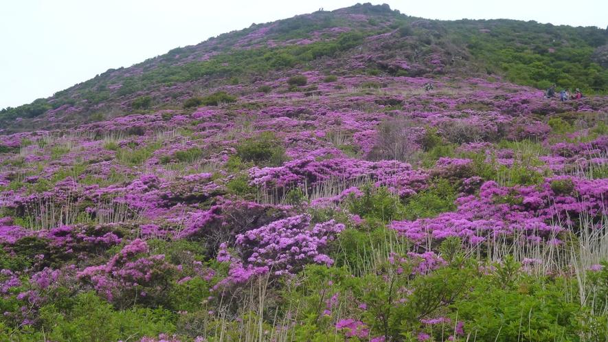 *【九重登山】雄大な九重の美しい景色を五感で感じて下さい