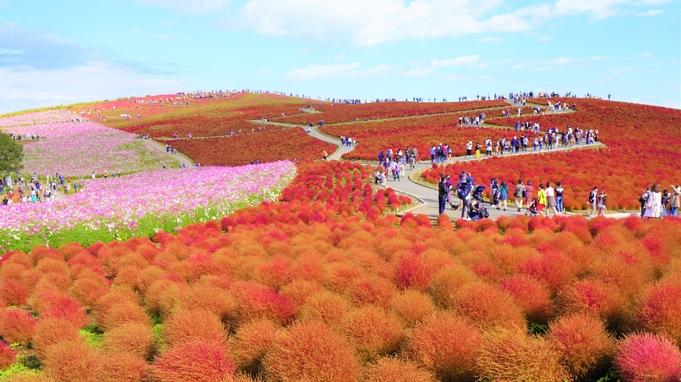 【期間限定】〜真っ赤に染まるみはらしの丘〜可愛らしい秋のまんまるコキアを楽しもう!《2食付》