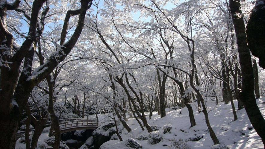 【箱根美術館】雪化粧をした苔庭もキラキラとても綺麗です♪
