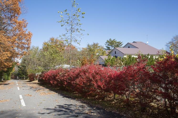 お庭―Garden(RIOの丘)―秋