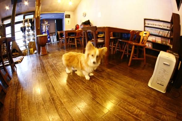 ペットもいっしょ♪愛犬と朝食付きB&Bプラン♪