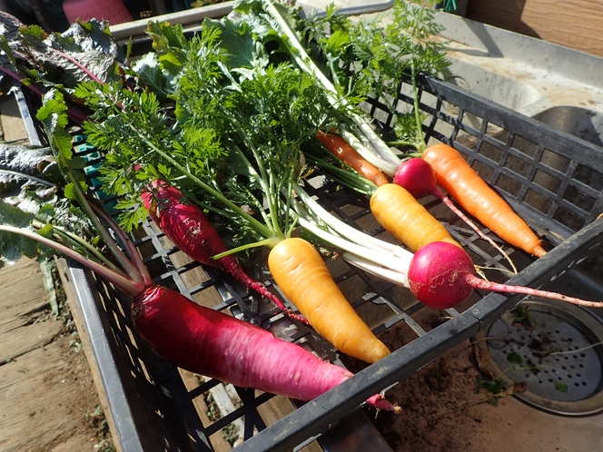 イイジマ農園収穫野菜例
