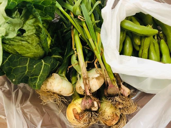ブロ雅農園収穫野菜