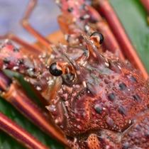 *古賀浦湾の恵み-それは何と言っても新鮮な海の幸。 最高の鮮度とクオリティでお客様にお届けいたします。