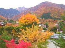 庭からの焼岳の紅葉