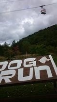新穂高ロープウエイ 第2乗り場「白樺平駅」にドッグラン