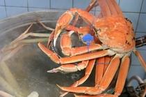 茹で蟹は、温かいうちに