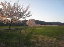 春になると満開の桜並木が見られます。