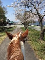 乗馬体験もできます