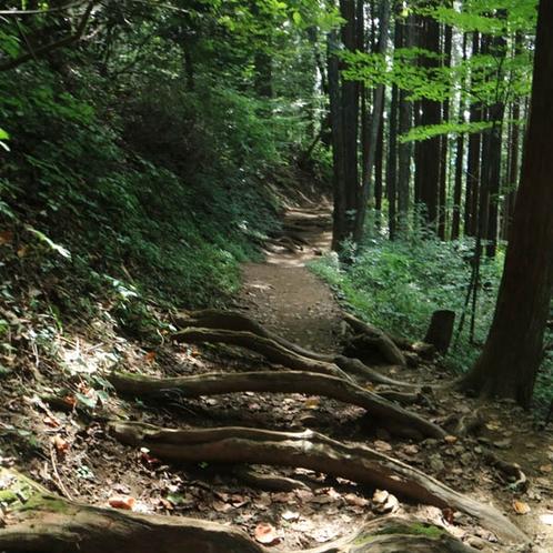 ハイキング・トレッキングで自然を満喫しませんか。