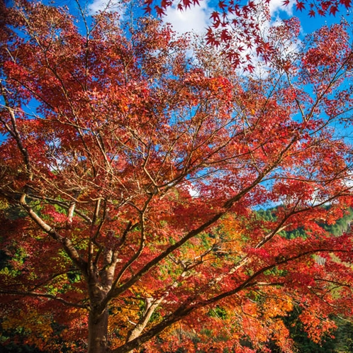御岳山の紅葉の見頃は例年10月下旬から11月初旬です。