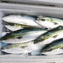 【大漁】大物釣りに挑戦しませんか?お声掛けください♪