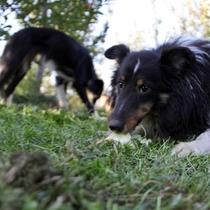 愛犬と一緒にリンゴ狩り その場でりんごをむしゃむしゃ♪