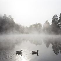 朝霧に煙る金鱗湖(きんりんこ)