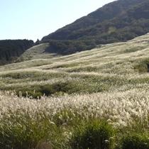 仙石原すすき高原(お車で20分)