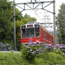 箱根登山電車(あじさい電車)