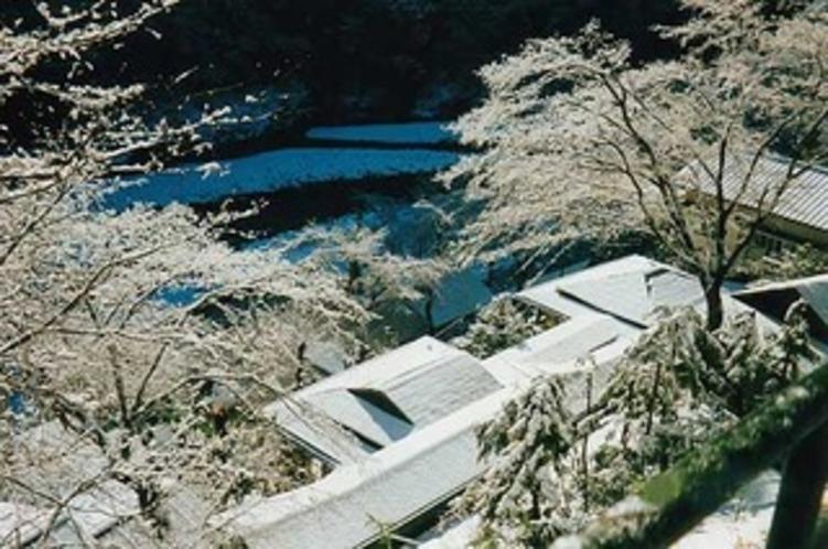 庭園011