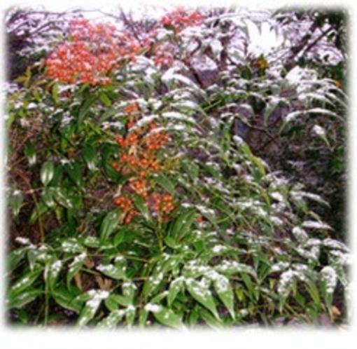 庭園012