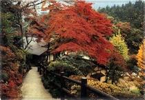 庭園017