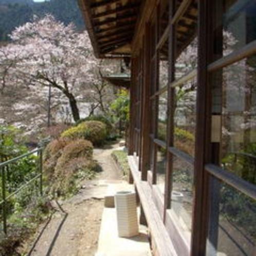 離れ客室からの桜