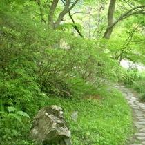日常を忘れてゆっくりと庭園散策