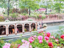 ハウステンボス バラの咲く風景