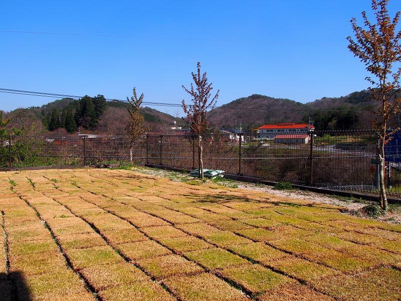ログコテージの芝生