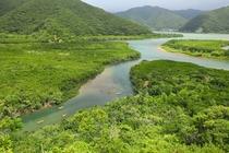マングローブ原生林2