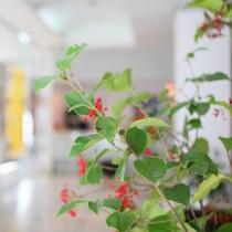 ロビー季節の花