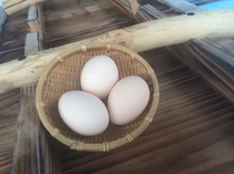 ウェルカム温泉卵