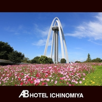 観光スポット:138タワー(秋のコスモス)