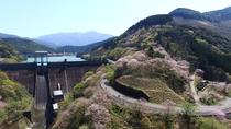 【周辺・観光】市房ダム湖周辺の桜(2020年3月27日現在:満開)