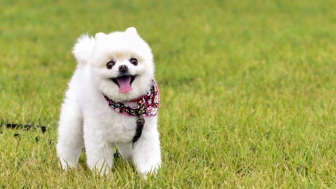 【1日1組限定】愛犬と同室宿泊★当プラン限定の備品をご用意♪「ペットと温泉旅プラン」