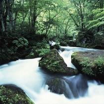 【奥入瀬渓流】滝、清流、岩、新緑のトンネルを散策♪