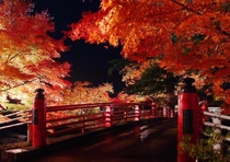 中野もみじ山『紅葉のライトアップ』NO2