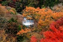 箱根 周辺観光 紅葉1
