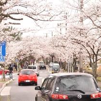 *【周辺観光】熱川では2月上旬から楽しめる河津桜が有名です。