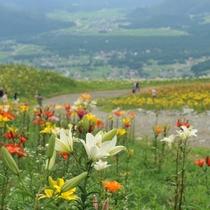 ■白馬岩岳ゆり園